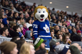 Marlies mascot Duke stands in the crowd